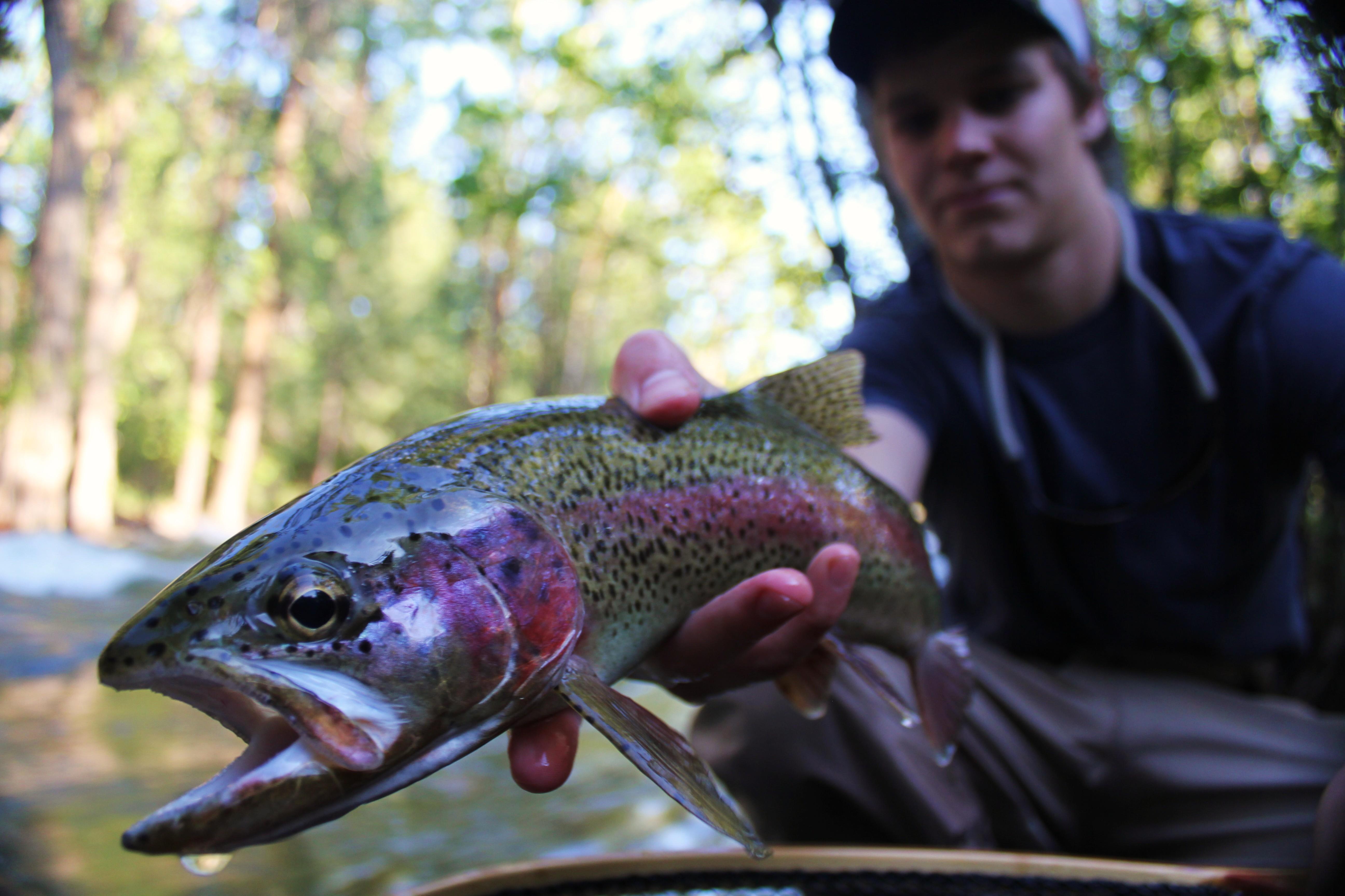 Montana Fishing Season